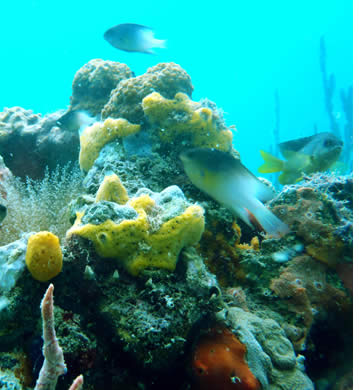 There are many scuba diving sites in Bocas del Toro, Panama